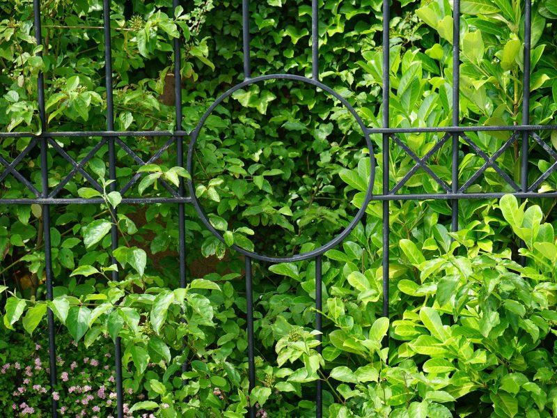 Gartenzaunbepflanzung:  3 Varianten und ihre Vorteile